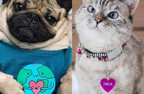 rs x doug the pug nala the cat
